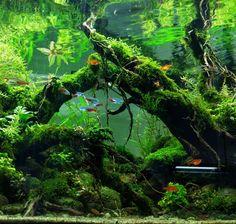 ijoh - Tinton Aryo Putro Yudhanto #plantedtank #aquascape                                                                                                                                                                                 More