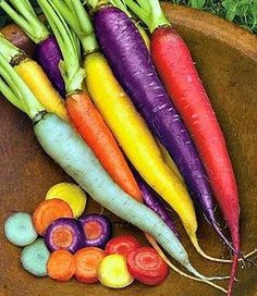 These would be so fun to harvest! Rainbow Carrot Mix six crazy colors 250 heirloom by SmartSeeds, $2.99 - ruggedthug