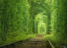 Fairy Tale Tunnel of Love Found in Klevan Ukraine
