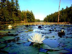 Dunlop Lake, Elliot Lake Ont. Canada Outdoor Camping, Quebec, Kayaking, Ontario, Beautiful Homes, Canada, Outdoors, City, Water