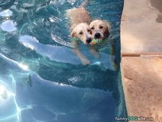 Fetching Together - funnydogsite.com #dogs #funny #cute