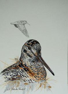 Dessin aquarellé Owl, Bird, Animals, Watercolor Drawing, Animales, Animaux, Owls, Animais, Birds