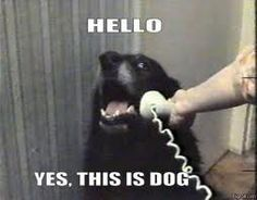 hello this is dog - Google Search