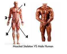 Diagram-body-fat-picture-explanation-male
