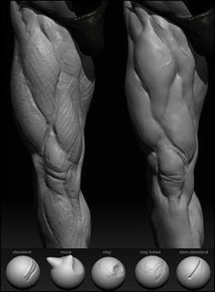 sculpting anatomy ref Zbrush Anatomy, Leg Anatomy, Anatomy Poses, Muscle Anatomy, Anatomy Sketches, Anatomy Drawing, Human Anatomy Art, Human Reference, Anatomy Reference