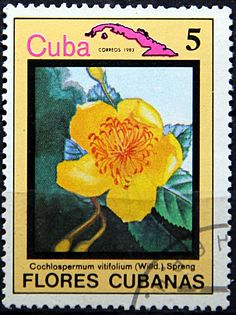 Cuba.  Cochlospermum vitifolium.  Scott 2635 A719, Issued 1983 Dec 20, Perf. 13, 5.
