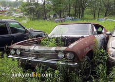 classic cars rotting  | Junkyard Life: Classic Cars, Muscle Cars, Barn finds, Hot rods and ...