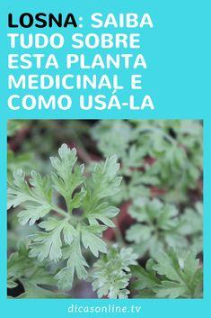 Losna: a erva tem inúmeros benefícios para a saúde Rainbow Diet, Eat The Rainbow, Eat To Live, Medicinal Plants, Fruits And Vegetables, Vegetable Garden, Aloe Vera, Natural Remedies, Herbalism