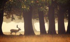 Photo misty by Mark Bridger on 500px