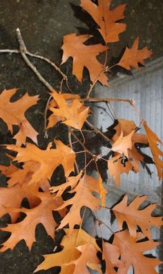 Here is your motivation for raking leaves in your yard