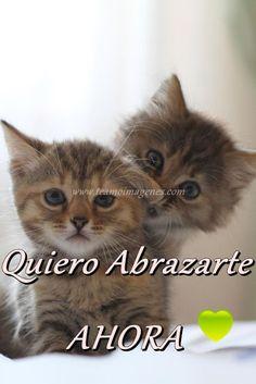 gatitos tiernos #gatitos #amor #tequiero #teamo
