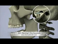 Interesting 3D computer generated visualisations of head and neck anatomy and physiology. DentalArt3D. 3D Dental Occlusion - YouTube