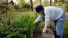 Puutarhanhoito on oiva tapa harrastaa liikuntaa, joka ehkäisee syöpää.