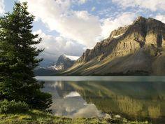 Arbol en el Lago | Wallpapers Gratis