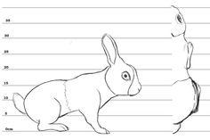 Animal blueprint model sheet