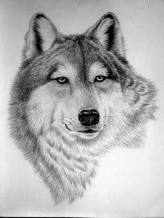 1000+ ideas about Pencil Drawings Of Animals on Pinterest | Easy ...
