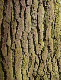 close-up-of-elm-tree-bark