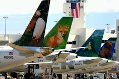 Airlines Could Reveal Strategies to Impede Spirit and Frontier  Travel This Week  The Big Three U.S. airlines have been heavily discounting to thwart the rise of Spirit and Frontier airlines. Pictured are Frontier planes on September 11 2012. Frontier  Sk