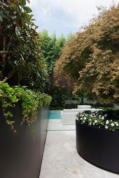 Feature tree in steel pot to Unit 1 terrace Landscape Architecture, Landscape Design, Garden Design, Residential Architecture, Exterior Colors, Exterior Design, Raised Planter, Steel Planter, Timber Battens