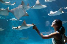 Manta Aquarium