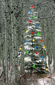 Christmas Tree in Aspen Forest~merry Christmas everyone.may we all retain our sense of connection to nature this year and every year. Christmas Time Is Here, Christmas Love, Country Christmas, Christmas Pictures, All Things Christmas, Winter Christmas, Christmas Lights, Christmas Decorations, Merry Christmas