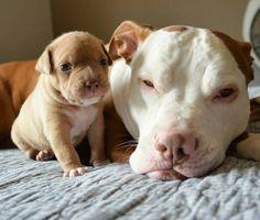 Penny and Kilo (photo cred @roofusandkilo)
