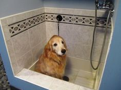 Dog bath... I wish I had this in my home!!!
