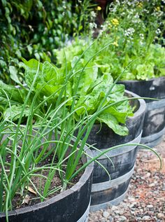 wine barrel vegetable garden...love this idea
