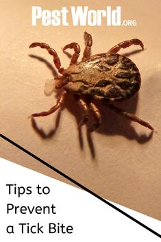 There are more than new cases of Lyme Disease each year. With tick populations on the rise, it is important to know the health risks they pose. Check out these tips provided by PestWorld for preventing a tick bite. Spider Killer, Tick Removal, Tick Spray, Deer Ticks, Tick Bite, Survival Life Hacks, Amazing Life Hacks, Lyme Disease, Insect Repellent