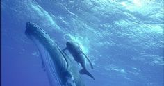The coolest and most beautiful pictures of the Big Blue Whale | TOOOPIC