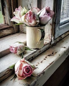 Flowers - Photography, still life life photography still My Flower, Beautiful Flowers, Beautiful Things, Deco Rose, Deco Floral, Rose Cottage, Pink Roses, Cream Roses, Still Life