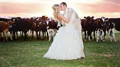 Dairy farm wedding - Google Search