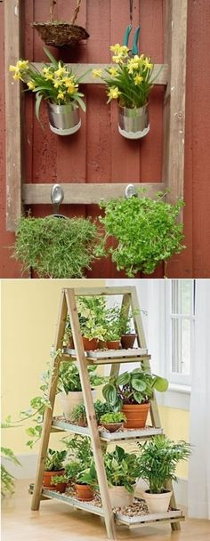 Maybe I can get rid of that old shaky ladder the hubs insists is still safe! Reuse old Ladder as a plant stand