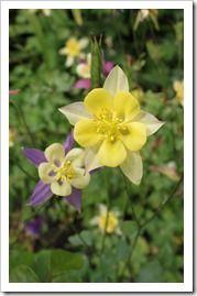 http://fishtailcottage.blogspot.com/2013/06/this-week-in-garden-61913.html
