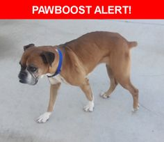 Is this your lost pet? Found in Tucson, AZ 85713. Please spread the word so we can find the owner!