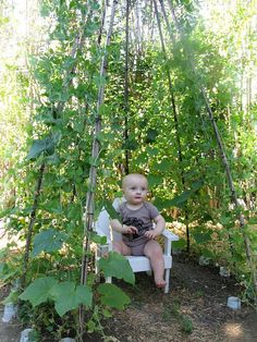 Pea-pea Teepee 2010 I love this idea! You leave one section open and the kids can pl Hops Trellis, Garden Trellis, Garden Planters, Pea Trellis, Fruit Garden, Edible Garden, Garden Animals, Garden Structures, Garden Projects