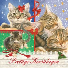 Kerstmis / katten