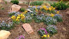 "May 12, 2010, via http://prairiebreak.blogspot.com/2015/03/kendrick-lake.html ""Tulipa chrysantha and Muscari 'Valerie Finnis'"" (also pink things, grasses, yellow thing)"