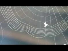 SPIDER AT WORK - YouTube