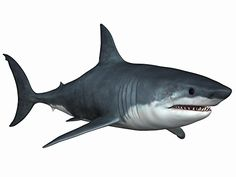 Great White Shark Wall Decal - 30 Inches W x 23 Inches H - Peel and Stick Removable Graphic Wallmonkeys Wall Decals http://www.amazon.com/dp/B00P5QVRCY/ref=cm_sw_r_pi_dp_4jvxub1KX0NMQ