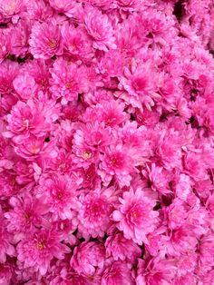 P P Pink !!! by Graham Richard 高健 Cloke, via 500px