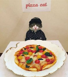 Cat Dresses Up To Have Dinner With His Mom, http://photovide.com/cat-dresses-dinner-mom/
