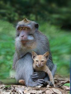 Amistades raras entre animales
