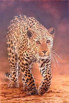 Michael Tancrel and Sharon Tancrel, specialists in South African wildlife paintings, have been producing fine art professionally for o. Wildlife Paintings, Wildlife Art, Animal Paintings, Watercolor Artists, Watercolor Animals, Watercolor Paintings, Watercolors, Animals Beautiful, Cute Animals