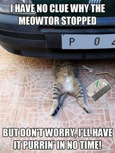 Cute Kitty Mechanic. Complete Auto Repair www.car-lakewood.weebly.com