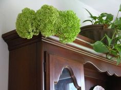 Hydrangeas will dry on their own, but this water method helps hydrangeas retain their color. Once dry, they can last and look beautiful for years.: Some Final Tips and Other Methods of Drying Hydrangeas Love Flowers, Dried Flowers, Wedding Flowers, Garden Crafts, Garden Projects, Garden Ideas, Wedding Wall, Drying Hydrangeas, Hydrangea Flower