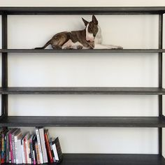Adorable, but who has this much space on their bookshelves?