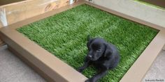 20 Cheap and Indoor Dog Bathroom Area Ideas - Tail and Fur - Dog potty area - 20 Cheap and Indoor Dog Bathroom Area Ideas – Tail and Fur You are in the right place about pets - Indoor Dog Potty, Porch Potty, Indoor Cats, Diy Projects For Dog Lovers, Patio Ideas For Dogs, Yard Ideas, Pasto Natural, Dog Bathroom, Bathroom Ideas