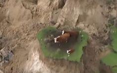 คลิปน่าอัศจรรย์ 'วัว 3 ตัว' รอดชีวิตหลังเกิดแผ่นดินไหว 7.5 แมกนิจูด ในนิวซีแลนด์ ด้วยสภาพแบบนี้… โดย ทอแสง
