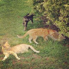 #animals #cat #garden